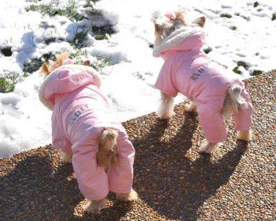 Fleece Snow Suits for Dogs http://www.teacupfashionsdogboutique.com/DD-PFSS-1109-PinkRuffinItSnowSuit.html